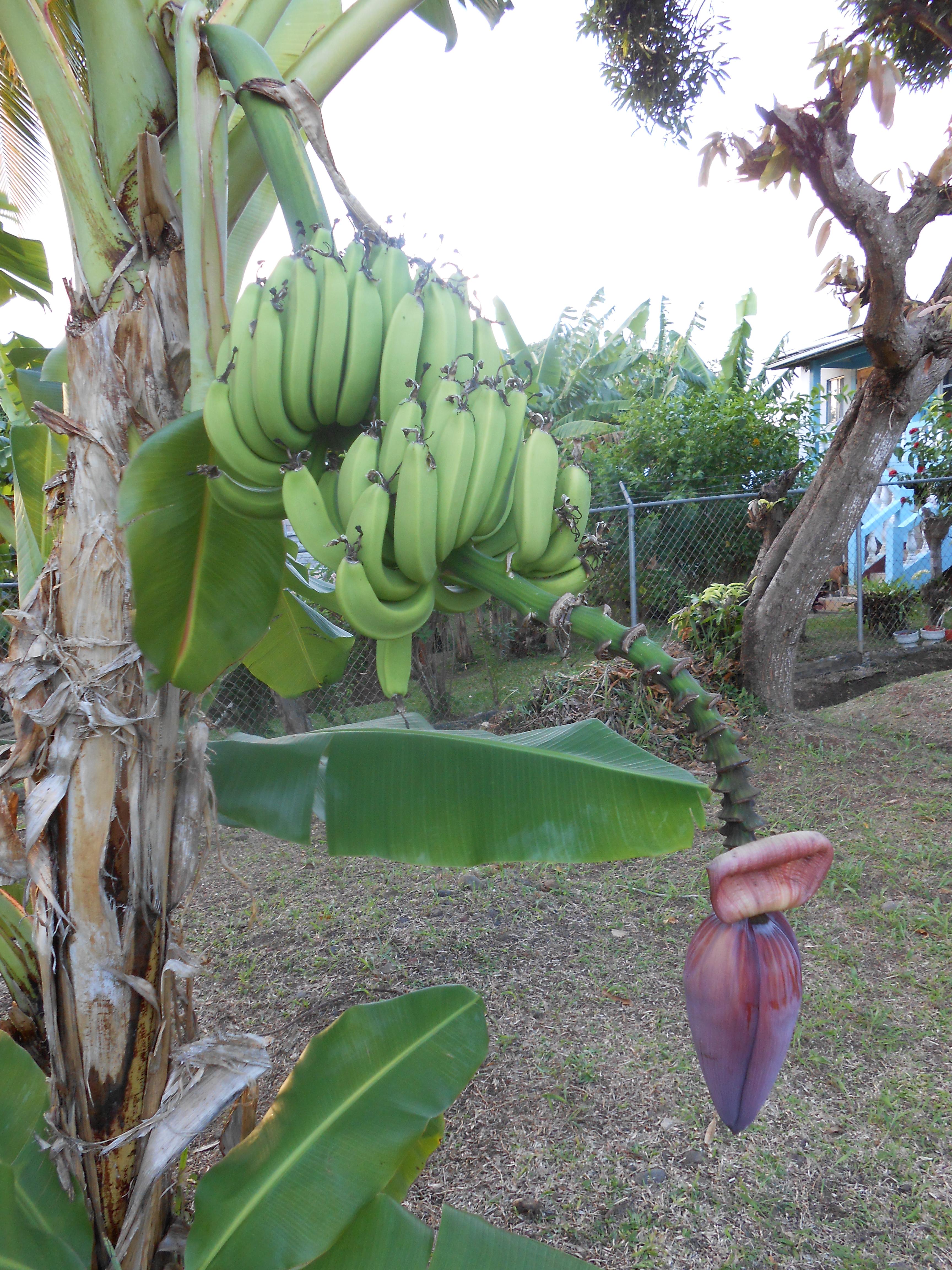 Grenada Food Report: Part III | Tan Rosie Caribbean Food Blog