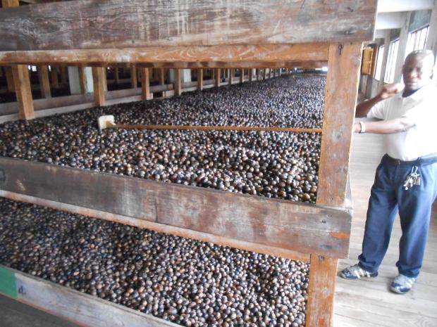 Grenville Nutmeg Factory 2