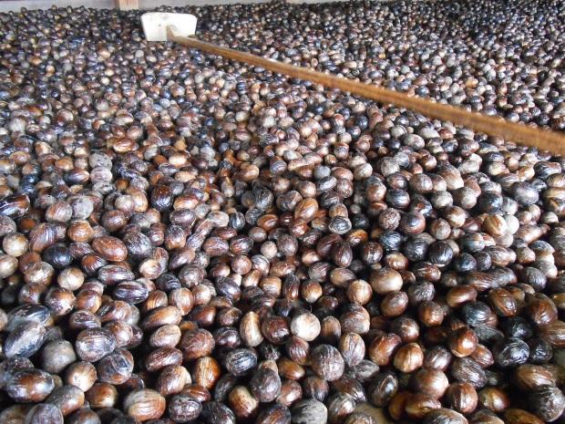Grenville Nutmeg Factory 3