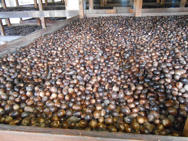 Grenville Nutmeg Factory 4
