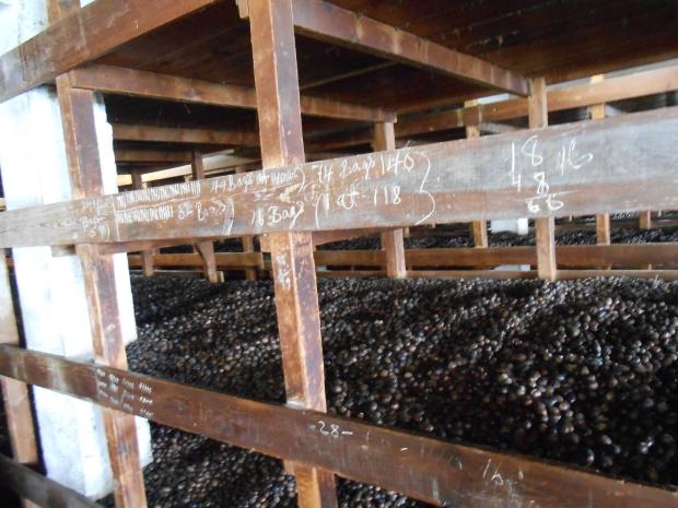 Grenville Nutmeg Factory 9