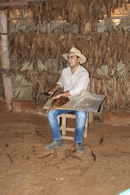 Farmer rolling cigars